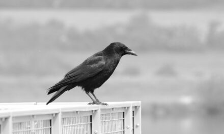 The thirsty crow – can it be better?