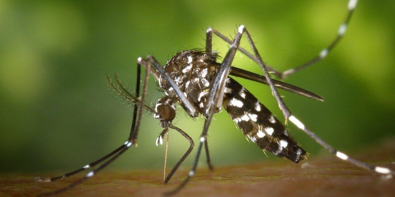Mosquitoes' terror!