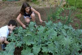 Kids growing their own veggies