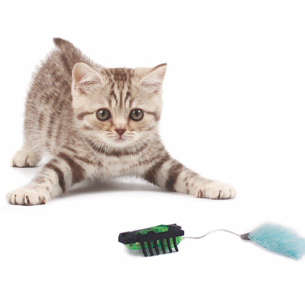 HEXBUG Cat Toys