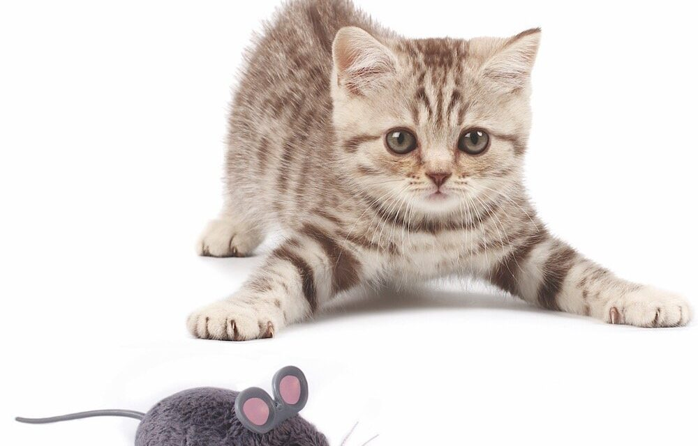 Review: Cat Toys by HEXBUG