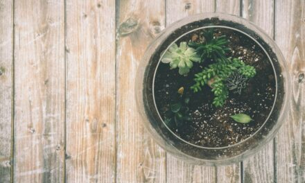 Poonam Bir Kasturi: The Lady Behind The Home Composting Revolution in India
